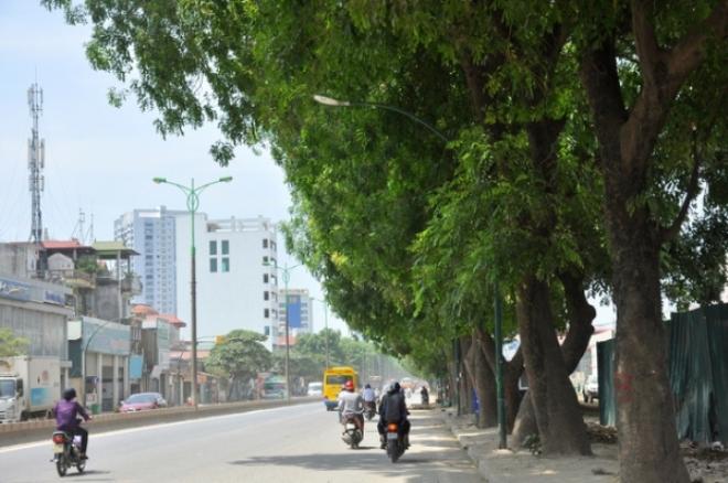Nhà báo Trần Đăng Tuấn: Nếu giữ cây xanh là bất khả kháng, Hà Nội cũng cần nói rõ - Ảnh 1.