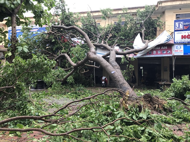 Nghệ An: Tan hoang sau bão, cây xanh bật gốc đè ô tô, người dân chặt cây tìm đường vào nhà - Ảnh 5.
