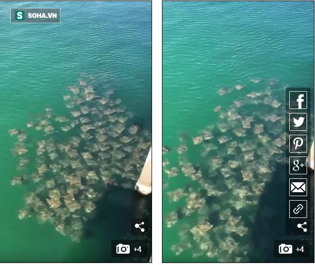 Giải mã hiện tượng kỳ lạ: Hàng trăm con cá đuối tụ tập ở bờ biển  Mỹ - Ảnh 2.