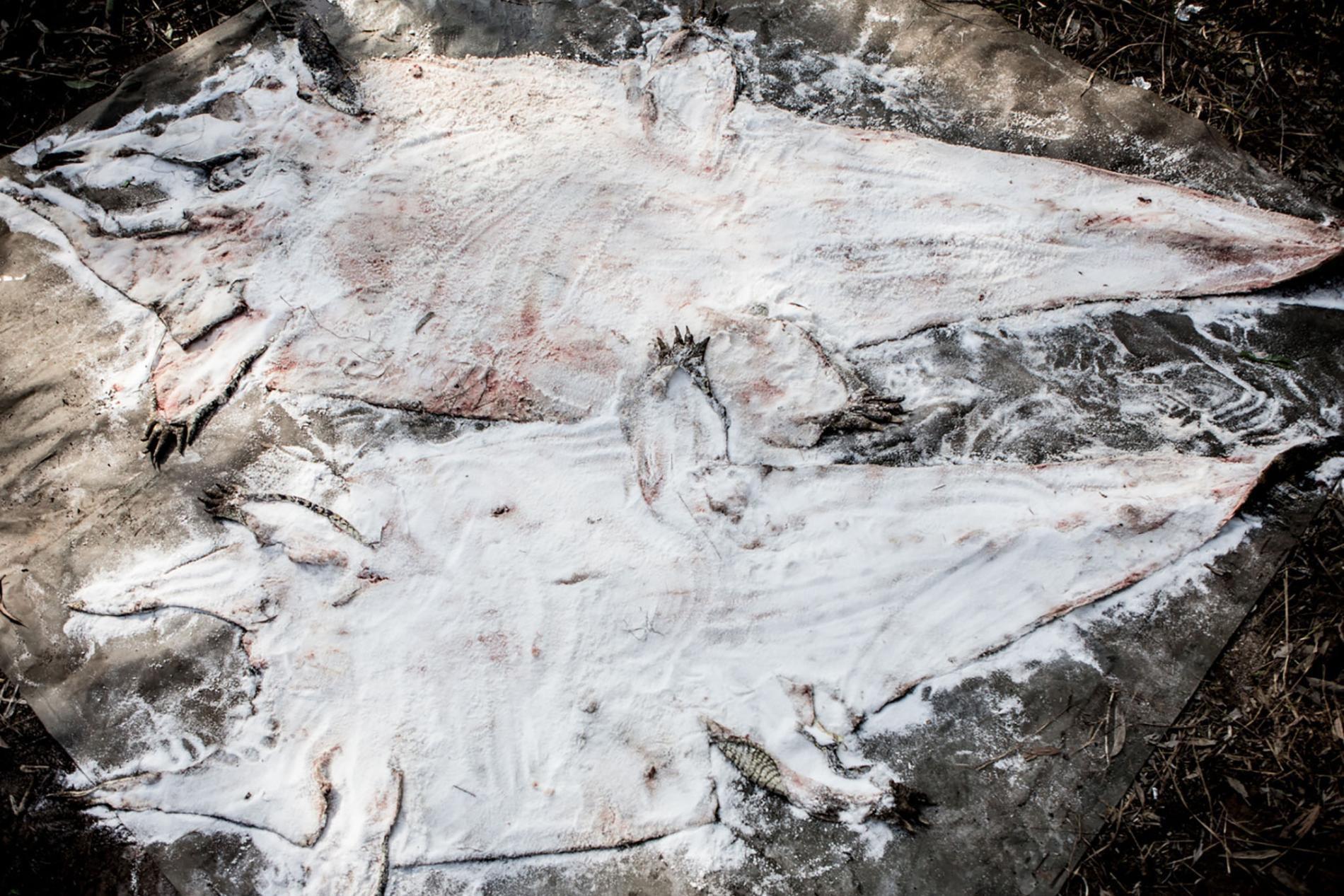 Săn cá sấu khổng lồ trên con thuyền vỏn vẹn dài 4m: Khi cuộc chiến thực sự bắt đầu! - Ảnh 14.