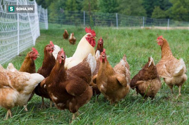 Mối lo về thực phẩm bẩn khiến các sản phẩm hữu cơ và lối sống Lohas lên ngôi ở Trung Quốc - Ảnh 1.