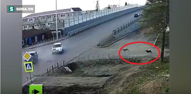 Cảnh tượng kỳ lạ ở ngã ba tử thần: Hai chú chó cứ tai nạn là chạy ra xem - Ảnh 1.