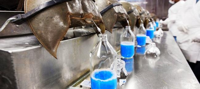 8 chất lỏng đắt đỏ nhất hành tinh: Riêng nọc độc của rắn hổ mang chúa có giá trên trời! - Ảnh 2.