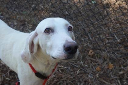 Chú chó bị bỏ rơi và 11 lần quay về trung tâm cứu hộ động vật vì  lý do xúc động - Ảnh 1.