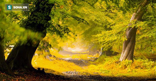 Cây to và cây nhỏ, bạn chọn chặt cây nào? và kết luận giúp nhiều người nhận ra thiếu sót - Ảnh 1.
