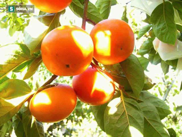 7 bí quyết rất hay của Đông y: Dùng thực phẩm để loại bỏ độc tố của thực phẩm - Ảnh 7.