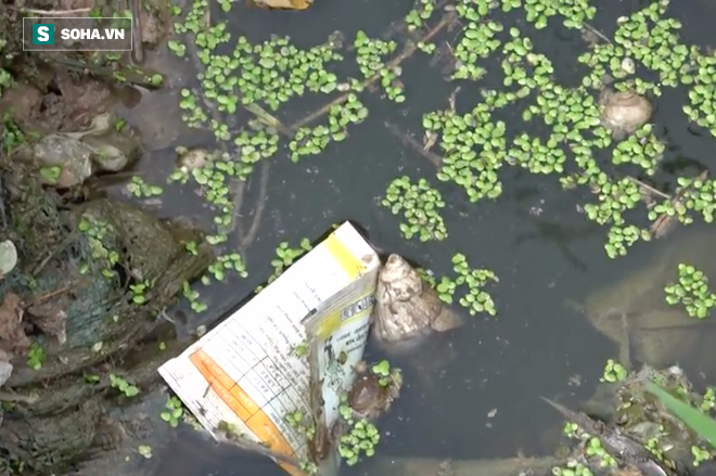 Video: Cận cảnh rau sạch tưới nước bẩn tại Hà Nội - Ảnh 4.