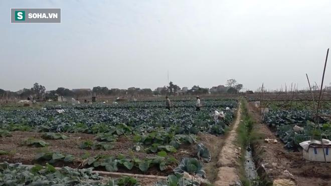Video: Cận cảnh rau sạch tưới nước bẩn tại Hà Nội - Ảnh 6.