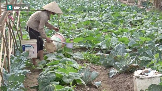 Video: Cận cảnh rau sạch tưới nước bẩn tại Hà Nội - Ảnh 8.