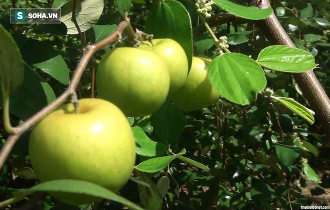 7 bí quyết rất hay của Đông y: Dùng thực phẩm để loại bỏ độc tố của thực phẩm - Ảnh 2.