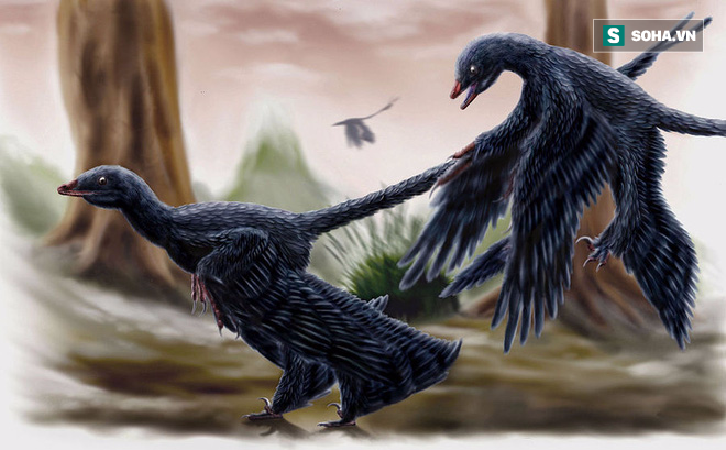 Chỉ to bằng con quạ nhưng loài khủng long này lại có tới 4 cái cánh - Ảnh 1.