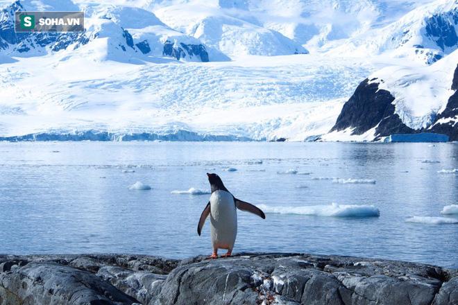 Biến đổi khí hậu tàn phá môi trường, viễn cảnh sau 100 năm lộ diện - Ảnh 2.