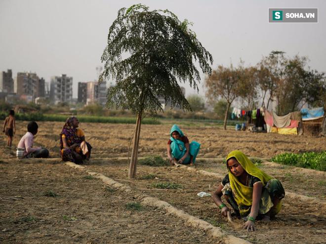 Gần 60.000 người Ấn Độ tự sát vì biến đổi khí hậu: Khi thuốc sâu không dùng cho cây trồng! - Ảnh 1.