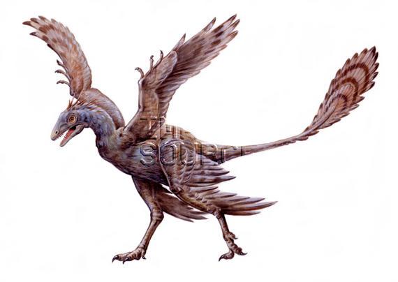 Chỉ to bằng con quạ nhưng loài khủng long này lại có tới 4 cái cánh - Ảnh 3.