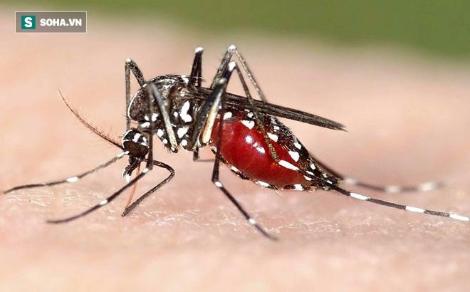 Chuyên gia khuyến cáo: Những dấu hiệu của bệnh sốt xuất huyết cần vào viện khám ngay - Ảnh 1.