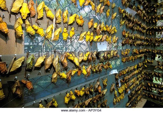 Đất nước bí ẩn bậc nhất thế giới: Dùng bươm bướm thay tiền, có mẫu ướp giá 636 triệu! - Ảnh 3.