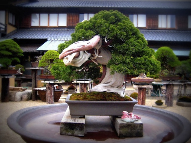 Bậc thầy bonsai Nhật và bí mật của vườn cảnh trăm tuổi được đại gia thế giới ước thèm - Ảnh 6.