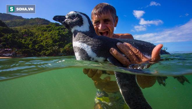 Sau khi được cứu mạng, chú chim cánh cụt đã làm một việc khiến nhiều người rớt nước mắt - Ảnh 1.