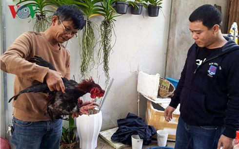 Gặp triệu phú nuôi gà Đông Tảo trên đất Gia Lai - Ảnh 1.