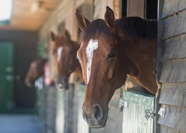 Cuộc đua ngựa ngược đời: Câu đố kinh điển với 8x và 9x đời đầu - Ảnh 4.