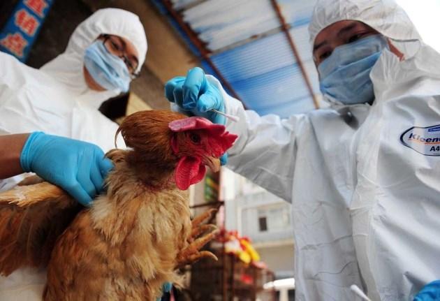 Phát hiện một số thay đổi về độc lực của H7N9 đối với gia cầm - Ảnh 1.