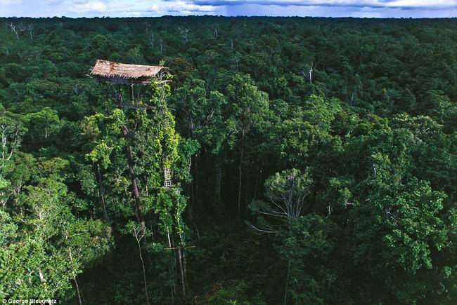Sống trên những ngôi nhà cây cao tới 50m, bộ lạc bí ẩn khiến nhiều người khâm phục sức sống phi thường - Ảnh 1.