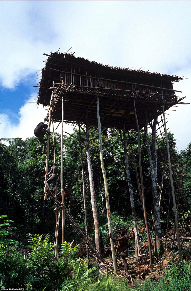Sống trên những ngôi nhà cây cao tới 50m, bộ lạc bí ẩn khiến nhiều người khâm phục sức sống phi thường - Ảnh 2.
