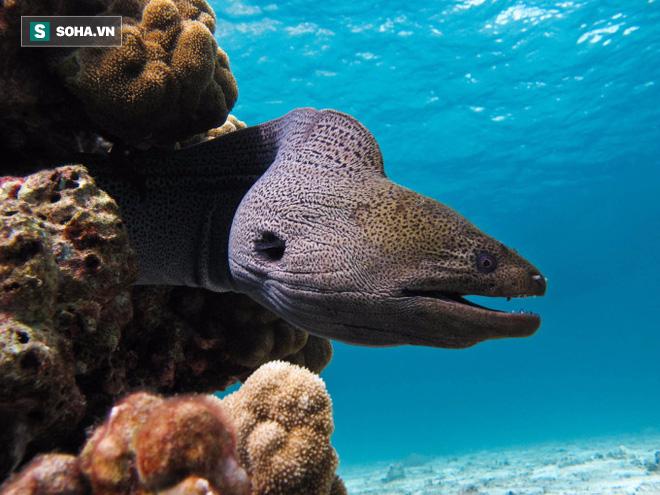 Dài hơn 2m, to như đùi người, con lươn này xé xác đồng loại không thương tiếc - Ảnh 1.