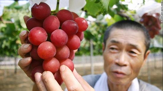 Tại sao người Nhật bỏ 600 triệu đồng mua một quả dưa? - Ảnh 1.