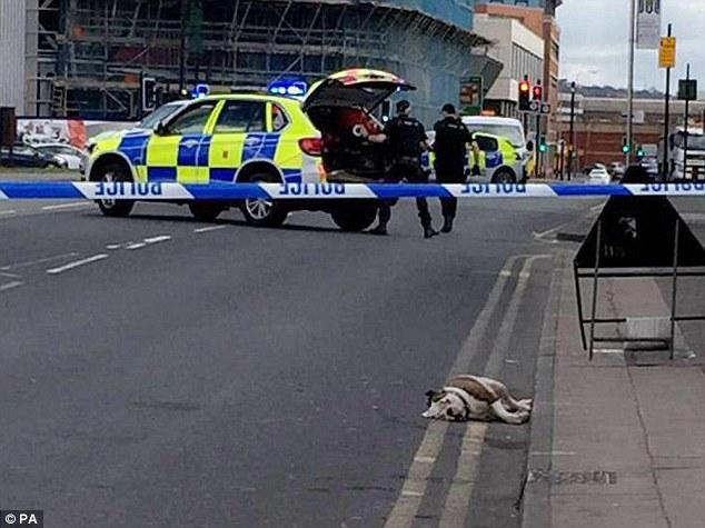 Điên cuồng tấn công trẻ nhỏ giữa trung tâm thành phố Anh, đàn chó bị cảnh sát vũ trang bắn chết - Ảnh 3.