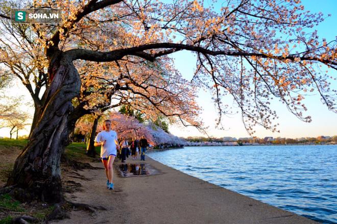 Viết từ Washington DC: Nước ngoài bỏ cả tỉ đô la làm hồ, người Việt bỏ tiền để biến hồ thành Thị Nở - Ảnh 1.