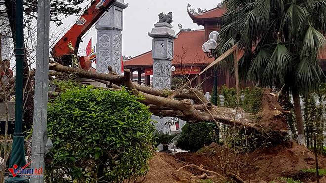 Phó chủ tịch TP Thái Bình: Vườn hoa tan hoang, tôi cũng sốt ruột - Ảnh 2.