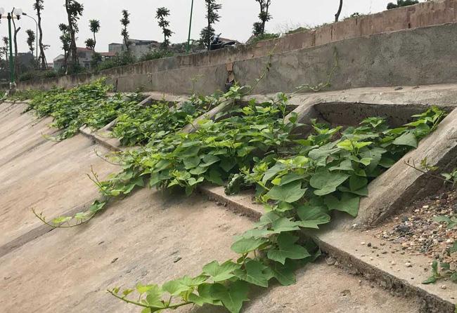 Khoét lỗ bê tông trồng rau: Hà thành sánh cùng Hà Giang - Ảnh 1.