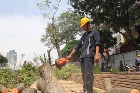 Bắt đầu đốn hạ hàng cây xanh trên đường Lê Lợi - Ảnh 1.