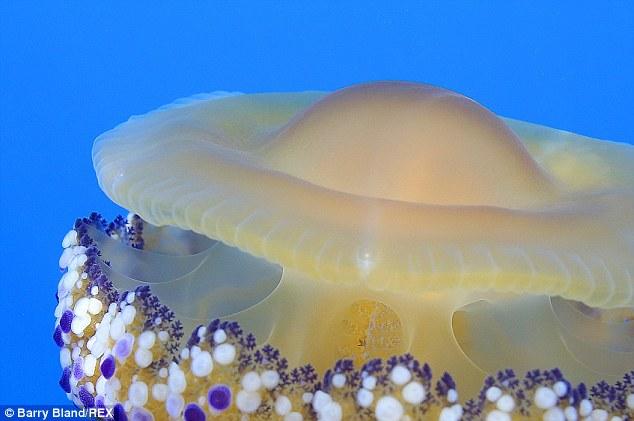 Thấy quả trứng chiên kỳ lạ trôi dưới lòng đại dương, nhiếp ảnh gia giật mình khi lại gần - Ảnh 1.