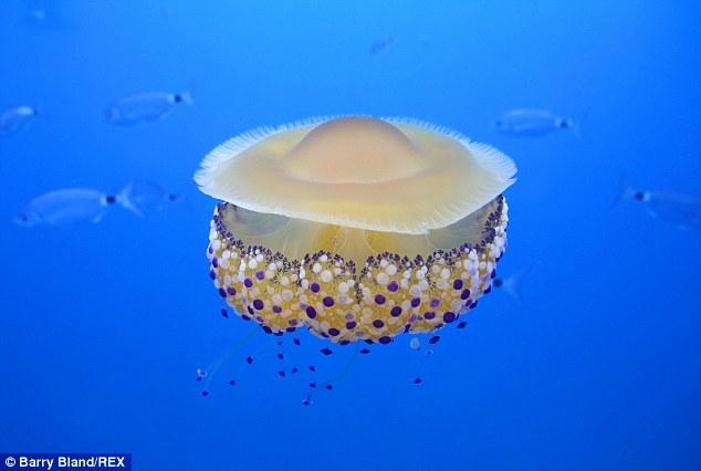 Thấy quả trứng chiên kỳ lạ trôi dưới lòng đại dương, nhiếp ảnh gia giật mình khi lại gần - Ảnh 2.