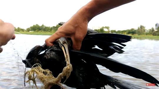 Cận cảnh chim cổ rắn nặng hơn 1kg do người dân Sài Gòn bắt được - Ảnh 2.