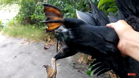 Cận cảnh chim cổ rắn nặng hơn 1kg do người dân Sài Gòn bắt được - Ảnh 5.