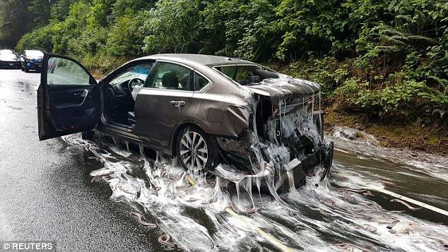 Cuộc đổ bộ của bầy lươn: Hơn 3,4 tấn lươn đổ ra đường tạo nên cảnh tượng kinh hoàng - Ảnh 1.