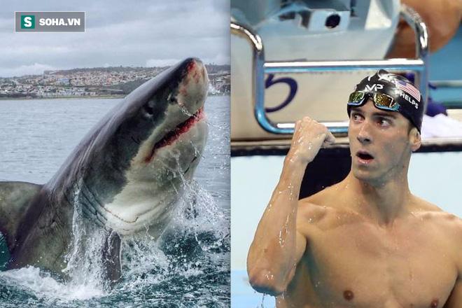 Siêu kình ngư Michael Phelps đua với cá mập trắng: Kẻ 8 lạng người nửa cân, ai thắng? - Ảnh 1.
