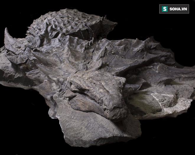 Phát hiện bất ngờ từ mẫu hóa thạch khủng long hoàn hảo, được ví như Mona Lisa - Ảnh 1.