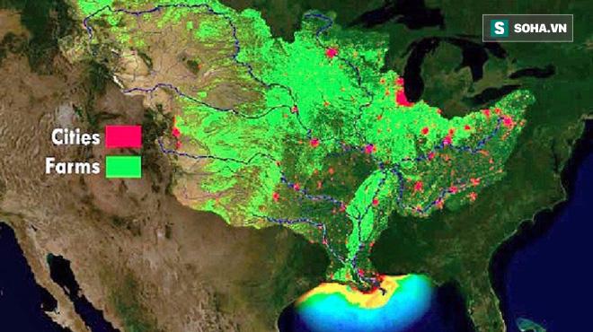Tìm ra nguyên nhân kích hoạt vùng nước chết không 1 sinh vật nào sinh sống ở vịnh Mexico - Ảnh 1.