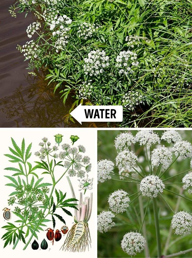 Đừng dại động vào những loài cây này vì chúng đẹp nhưng độc không tưởng - Ảnh 2.