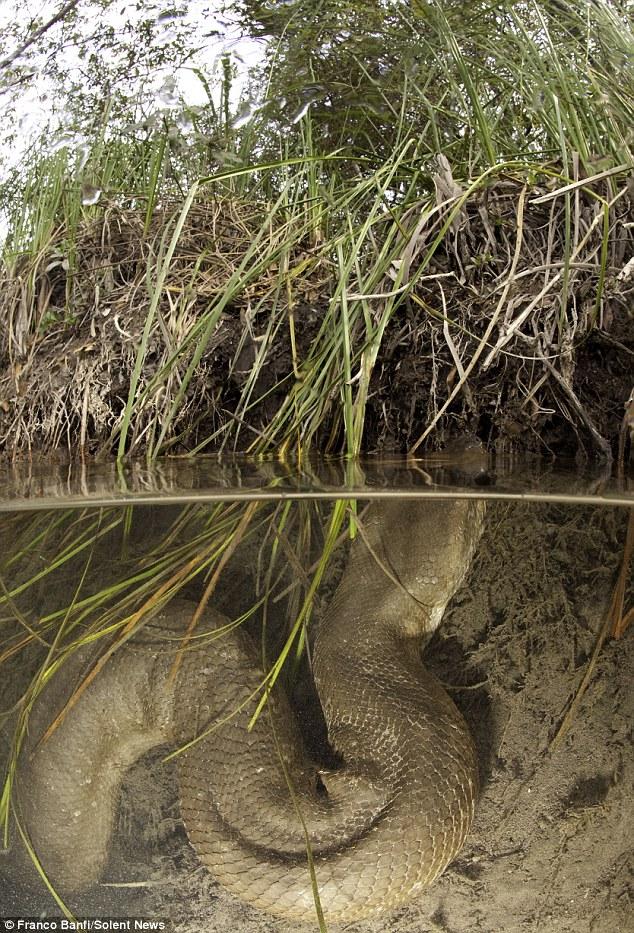 Tận mắt cuộc săn tìm quái thú lòng sông 7,9 mét: Không có lồng sắt bảo hộ! - Ảnh 3.