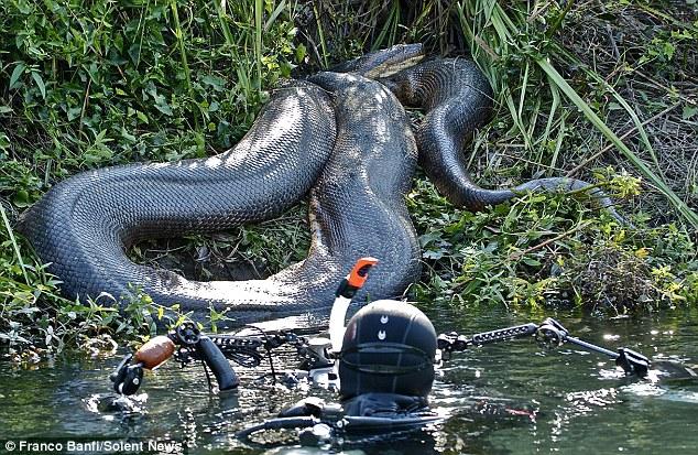 Tận mắt cuộc săn tìm quái thú lòng sông 7,9 mét: Không có lồng sắt bảo hộ! - Ảnh 6.