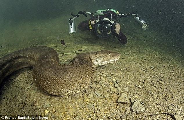 Tận mắt cuộc săn tìm quái thú lòng sông 7,9 mét: Không có lồng sắt bảo hộ! - Ảnh 7.