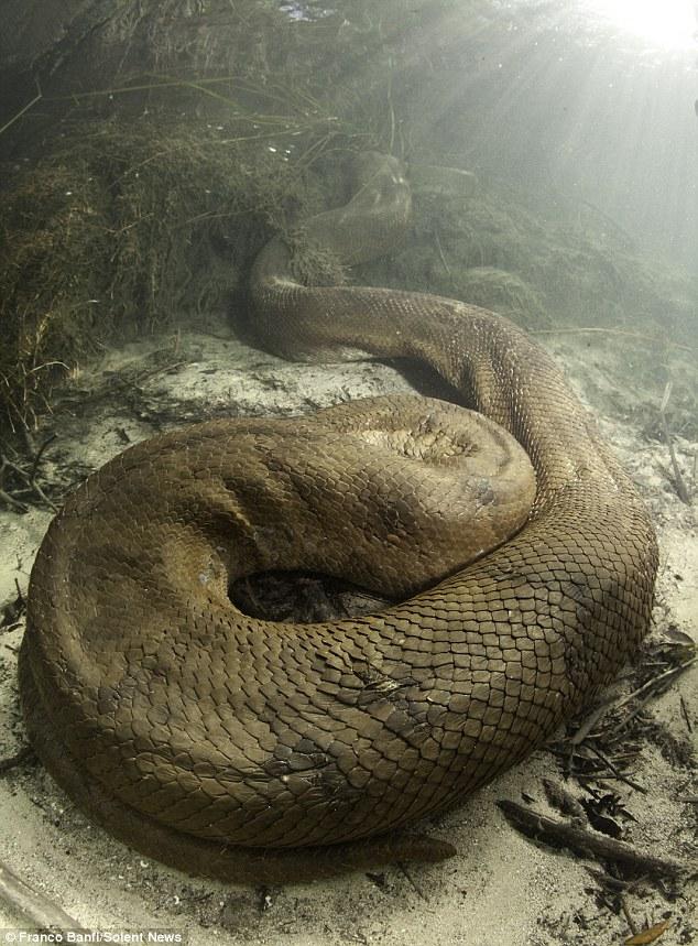 Tận mắt cuộc săn tìm quái thú lòng sông 7,9 mét: Không có lồng sắt bảo hộ! - Ảnh 8.