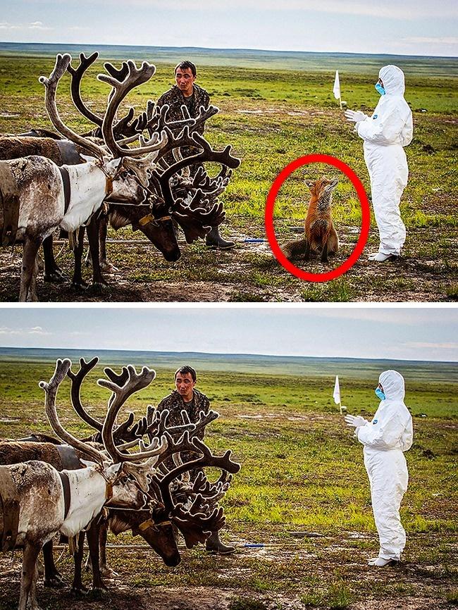 Chỉ thiên tài mới phát hiện ra sai lầm trong những bức ảnh này - Ảnh 8.