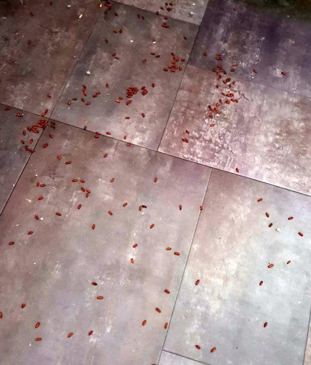 Nhà bị đàn giòi tấn công, người phụ nữ hốt hoảng khi biết chúng có nguồn gốc từ xác chết của hàng xóm - Ảnh 2.
