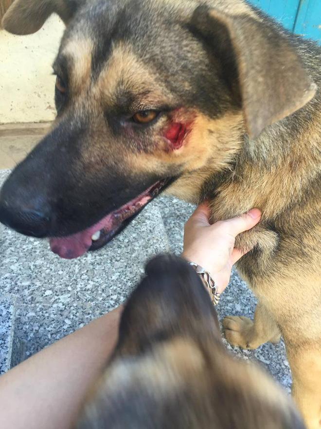 Phát điên vì hàng xóm hồn nhiên: Thả rông cho chó phóng uế nhờ, rác nhà mình gửi cổng nhà người khác - Ảnh 2.